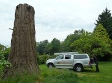 001 treeability-giant-redwood