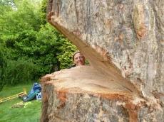 012 treeability-giant-redwood-12