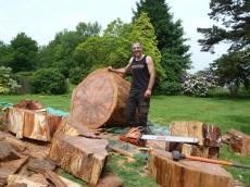 015 treeability-giant-redwood-15