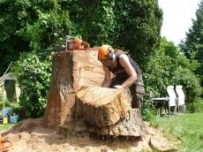 016 treeability-giant-redwood-16
