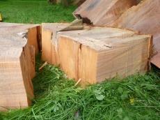 treeability-giant-redwood-20