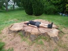 treeability-giant-redwood-26
