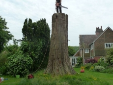 003 treeability-giant-redwood