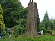 004 treeability-giant-redwood