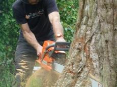 005 treeability-giant-redwood