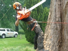 09 treeability-giant-redwood-9
