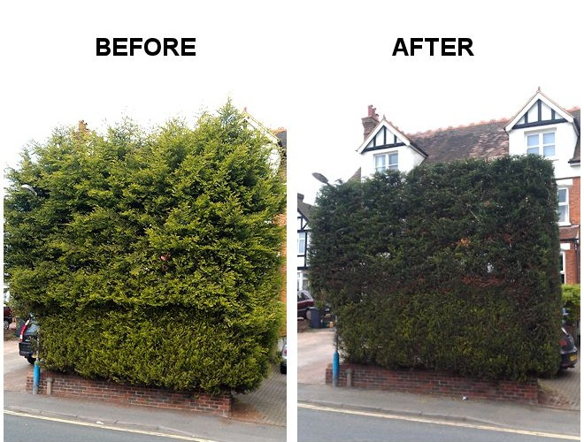 TreeAbility Hedging before and after