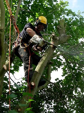 TreeAbility Pruning and Felling