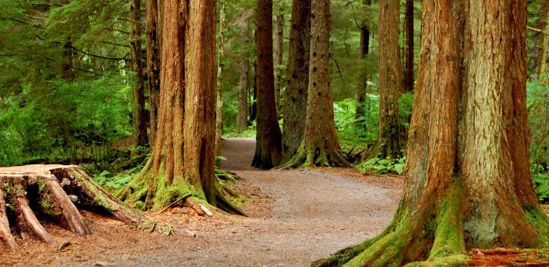 TreeAbility1