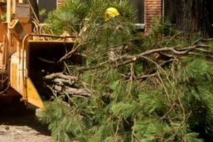 TreeAbility Tree Pruning Services