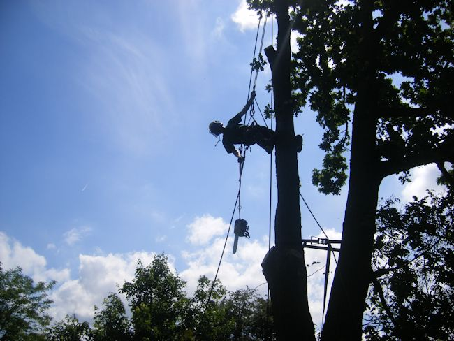TreeAbility Tree Pruning