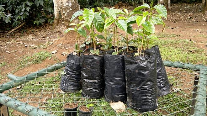 TreeAbility Planting