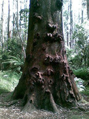 tree-disease