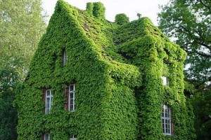 Ivy – Love it or hate it?