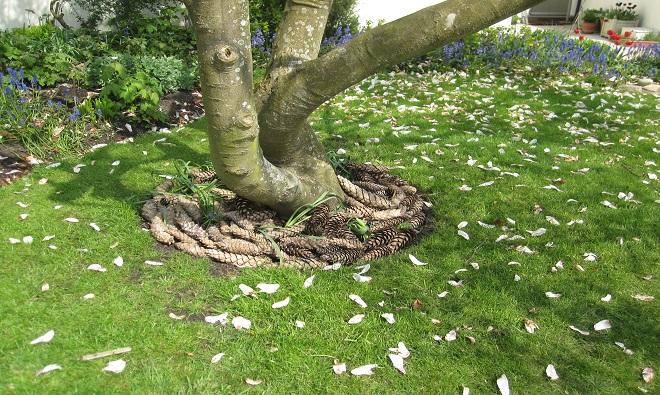 TreeAbility Tree Ring Nick Winram 3 Mulch